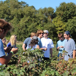 Southern Studies 101 Honors students explore a cotton field to accompany their reading of High Cotton: Four Seasons in the Mississippi Delta
